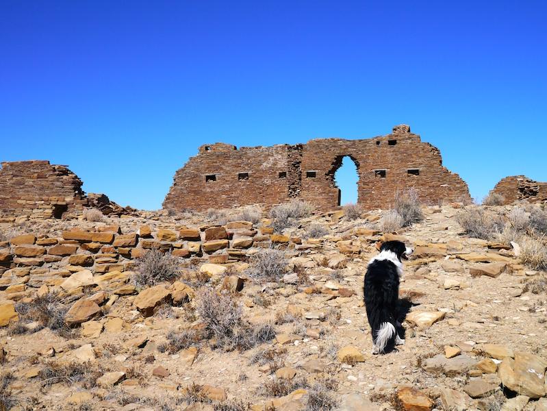 Dog. . . Pueblo Alto